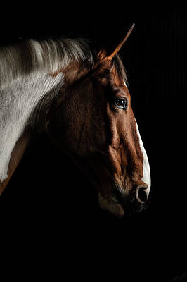 Racehorse Photograph - Warmblood by Samuel Whitton