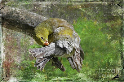 Photograph - Wash Day Goldfinch, With Texture by Debbie Portwood