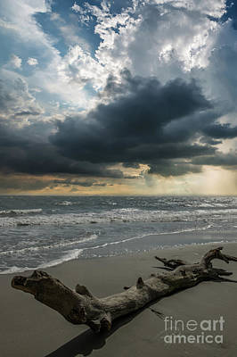 Photograph - Washed Ashore by Dale Powell