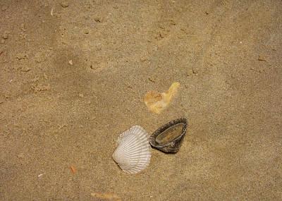 Shells Washed Ashore Art Print by JAMART Photography