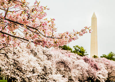 Photograph - Washington Monument 4 by Karen Saunders