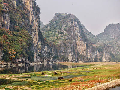 Photograph - Water Buffalo On The Li River China by Lynn Bolt