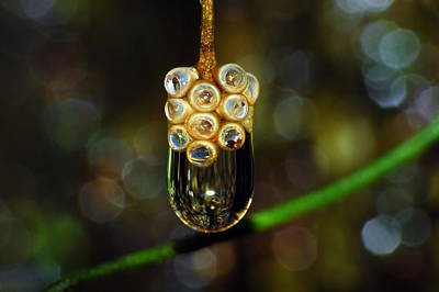 Photograph - Water Drop by Larah McElroy