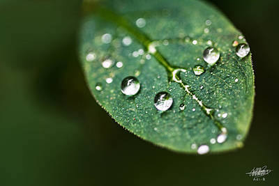 Photograph - Water Droplets by Adnan Bhatti