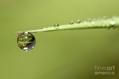 Photograph - Water Drops On The Grass by Odon Czintos