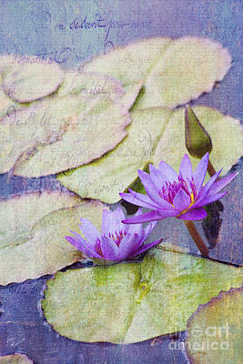 Photograph - Water Lilies by Diane Macdonald