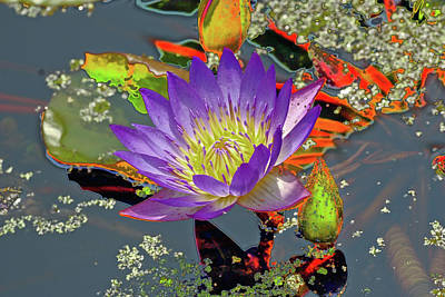 Digital Art - Water Lilly  by Don Wright
