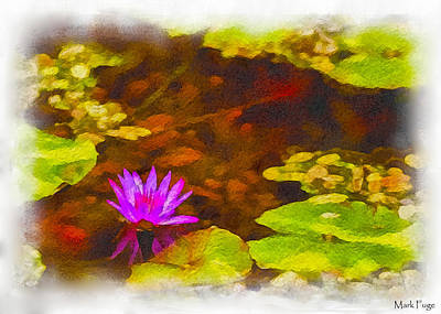 Dap Photograph - Water Lilly  by Mark Fuge
