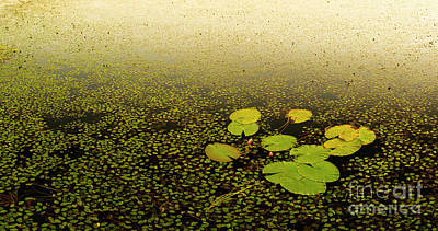 Lilies Photos - Water Lily Pads by Tim Hester