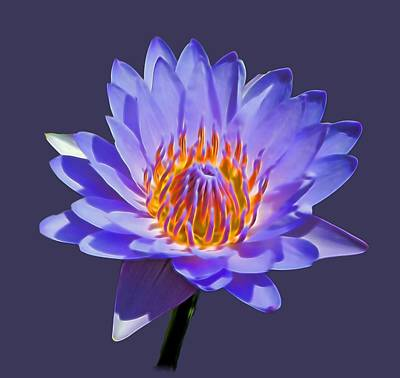 Photograph - Water Lily by Pamela Walton