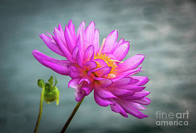 Photograph - Water Lily by Randy J Heath