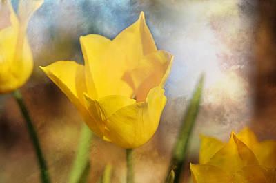 Water Lily Tulip Flower Art Print