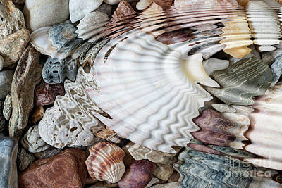 Photograph - Water Ripples Above Pebbles And Seashells by Michal Boubin