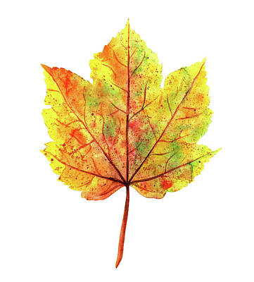 Watercolor Autumn Maple Leaf Art Print