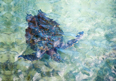 Photograph - Watercolor Turtle by Denise Bird