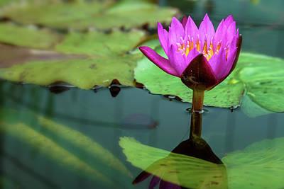 Photograph - Waterlily 6 by Jonathan Nguyen