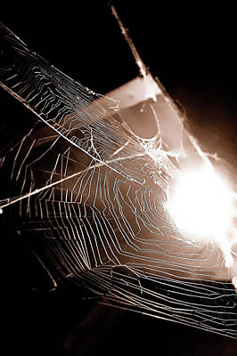 Photograph - Web by Jeff Heimlich