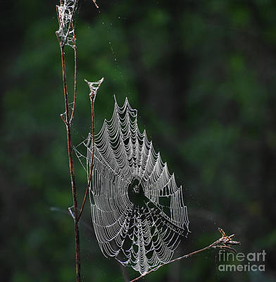 Photograph - Webs We Weave by Skip Willits