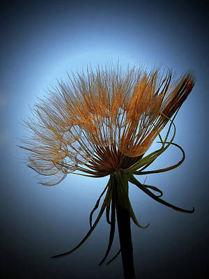 Photograph - Weeds Can Be Beautiful by Judy Johnson