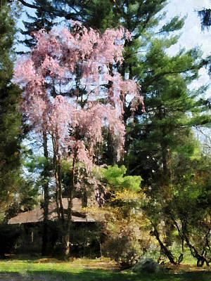 Photograph - Weeping Cherry by Susan Savad