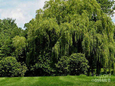 Photograph - Weeping Willow Tree Landscape  by Carol F Austin
