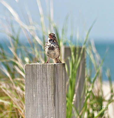Photograph - Welcome To The Cape by Michelle Wiarda-Constantine