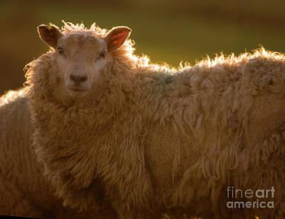Welsh Lamb In Sunny Sauce Art Print by Angel  Tarantella