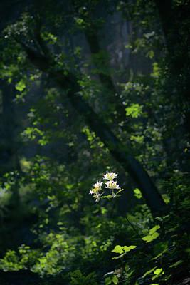 Photograph - Western Azalea by Alexander Kunz