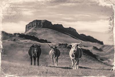 Western Longhorns Art Print