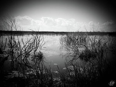 Photograph - Wetlands by Elie Wolf
