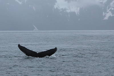 Photograph - Whale Fluke by Brandy Little