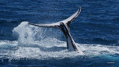 Photograph - Whale Tail Cascading Water by Gary Crockett