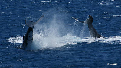 Photograph - Whale Tails by Gary Crockett