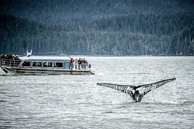 Photograph - Whale Watching Near Skagway Alaska by Alex Grichenko