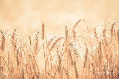 Photograph - Wheat Field by Cheryl Baxter