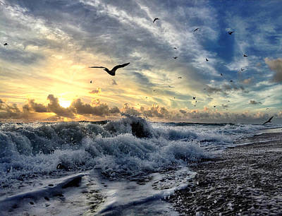 Photograph - Where Seagulls Fly by Andrew Royston