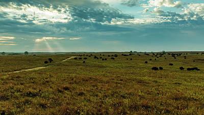 Photograph - Where The Buffalo Roam by Jay Stockhaus