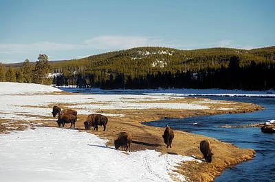 Photograph - Where The Buffalo Roam by L O C