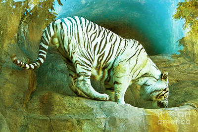 Photograph - White Bengal Tiger by Irina Afonskaya