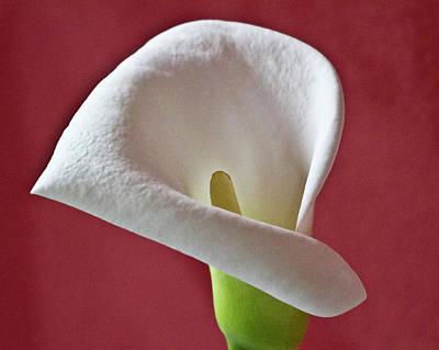 White Calla Art Print by Heiko Koehrer-Wagner