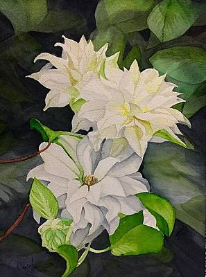 David Hoque Painting - White Clematis  by David Hoque