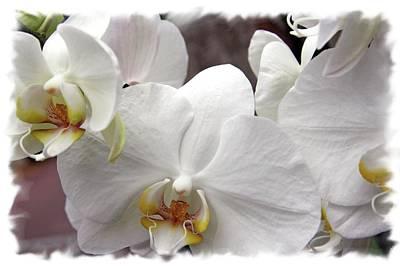Photograph - White Flower by Lali Kacharava