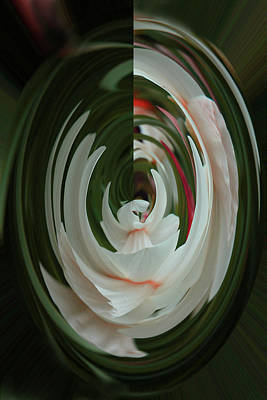 Photograph - White Form by Nareeta Martin