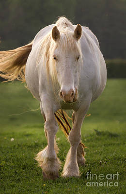State Love Nancy Ingersoll - White Horse by Angel Ciesniarska