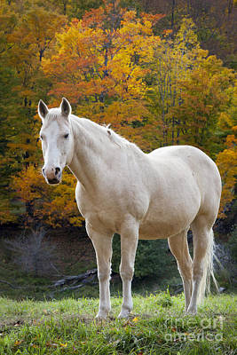Photograph - White Horse In Autumn by Brian Jannsen