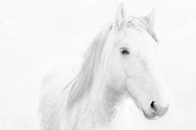 Photograph - White Horse by Jacqi Elmslie