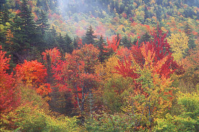 Photograph - White Mountain Foliage by John Burk