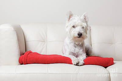 Sofa Photograph - White On Red by Edward Fielding