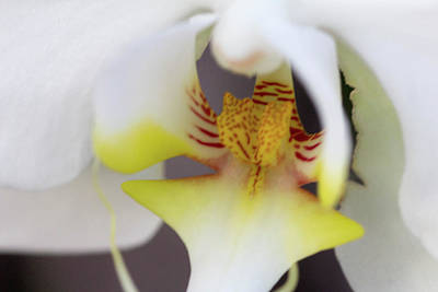 Photograph - White Orchid by Nance Larson