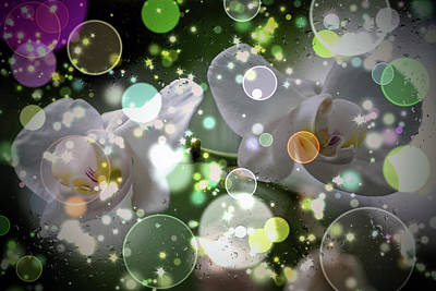 Digital Art - White Orchids  by Don Wright